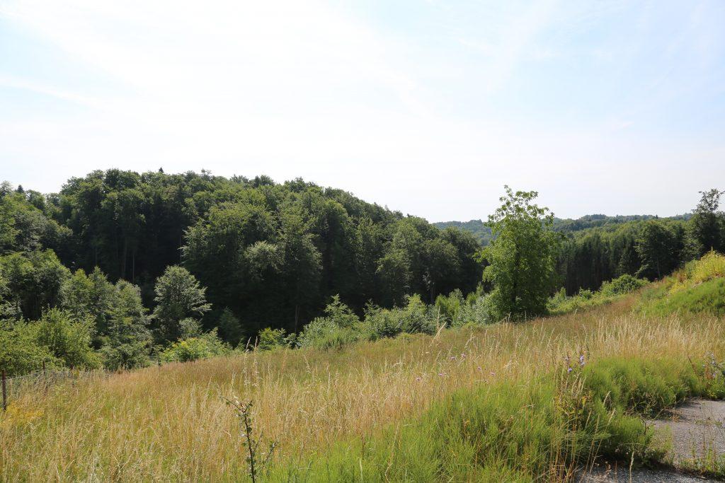 Blick ins Laßnitztal von der Landesstraße